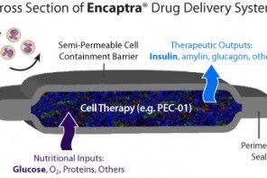 células beta encapsuladas Vyacite