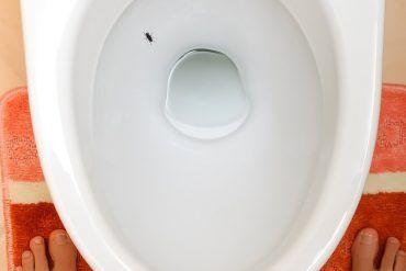 adhesivo de mosca en el inodoro